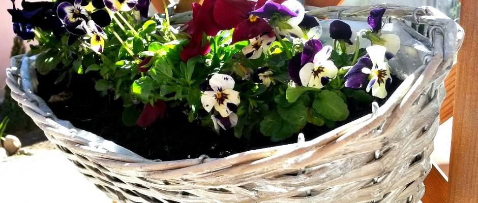 Rezoluție de primăvară: amenajează-ți propria grădină aromată